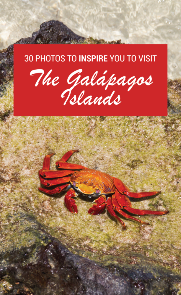 30 Photos That Will Make You Pack Your Bags And Visit The Galapagos Islands