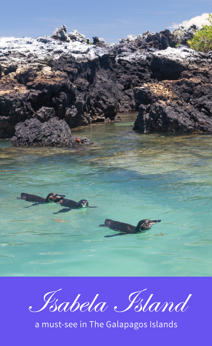 Isabela Island a must-see in The Galapagos Islands